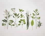 Varias hierbas frescas - foto de stock
