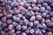 Ciruelas frescas y maduras - foto de stock
