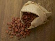 Fave di cacao nel sacco della iuta — Foto stock