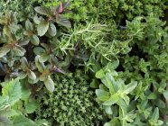 Vue de dessus de diverses herbes fraîches en pots — Photo de stock
