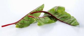 Свежие листья свеклы — стоковое фото