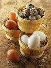 Uova di gallina nel cestello — Foto stock