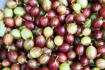 Uva spina fresca e matura — Foto stock