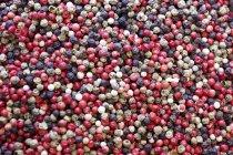 Maíz mixto de pimienta multicolor - foto de stock