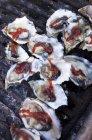 Haufen von Grill Austern — Stockfoto