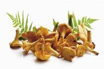 Fresh chanterelles, close-up — Stock Photo