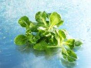 Кукурузный салат в воде — стоковое фото