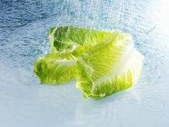 Зеленый Ромэн — стоковое фото