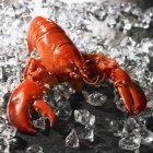 Vista del primo piano di un rosso aragosta cucinata in ghiaccio su superficie nera — Foto stock