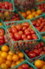 Cherry Tomatoes in Small Plastic Crates — Stock Photo