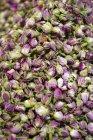 Верхний вид сушеных бутонов роз — стоковое фото