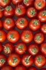 Tomates rojos maduros de la Roma - foto de stock