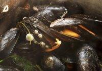 Gedämpfte irische Muscheln mit Zitrone — Stockfoto