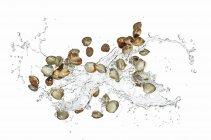 Mejillones con agua salpicada - foto de stock