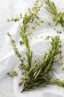 Freschi rametti di rosmarino e origano — Foto stock