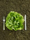Testa fresca di lattuga in sporcizia — Foto stock