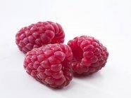 Свежие Красная малина — стоковое фото