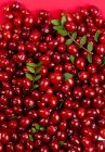 Fresh ripe Cranberries — Stock Photo