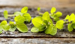 Folhas de orégano fresco — Fotografia de Stock