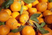Mandarini freschi con i fogli — Foto stock