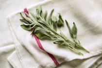 Salvia fresca su un canovaccio — Foto stock