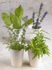 Vista close-up de ervas variadas em copos — Fotografia de Stock