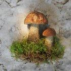 Bolete de vidoeiro cogumelos com musgo — Fotografia de Stock