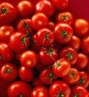 Свежие красные помидоры — стоковое фото