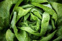 Свежезаваренным промывают салата — стоковое фото