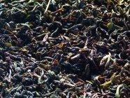 Сушені чорного чаю листя — стокове фото