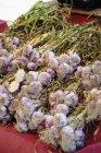Свежесобранный чеснок — стоковое фото
