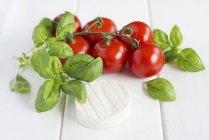 Виноградна лоза помідорів з базиліком — стокове фото