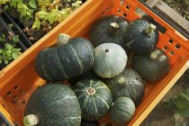 Kabocha squashes in crate — Stock Photo