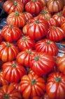 Costoluto Дженовезе помідори — стокове фото