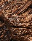 Rinderbrust vom Grill — Stockfoto