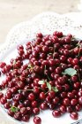 Fresh picked morello cherries — Stock Photo