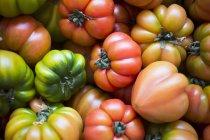 Різні помідорів біфштекс — стокове фото
