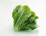 Ромен свіжий салат — стокове фото