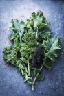 Fresh green and purple kale leaves — Stock Photo