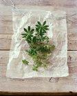 Vista superiore di woodruff fresco su carta pergamena — Foto stock