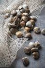 Vista de primer plano de pequeñas almejas montón y red - foto de stock
