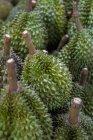 Крупным планом вид сырья целые Дуриан плоды — стоковое фото