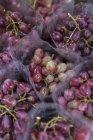 Uva rossa in sacchetti di plastica — Foto stock