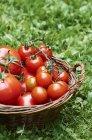 Panier de tomates fraîches — Photo de stock