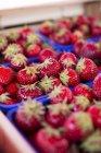 Fresas en mosquiteros de plástico - foto de stock