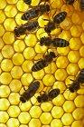 Abeilles assises sur nid d'abeilles — Photo de stock