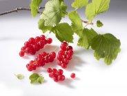 Ribes rosso con ramoscello e foglie — Foto stock