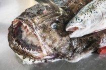 Rana pescatrice e salmone freschi — Foto stock
