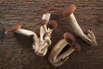 Setas frescas de Pholiota - foto de stock