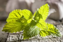 Rametto di menta fresca — Foto stock